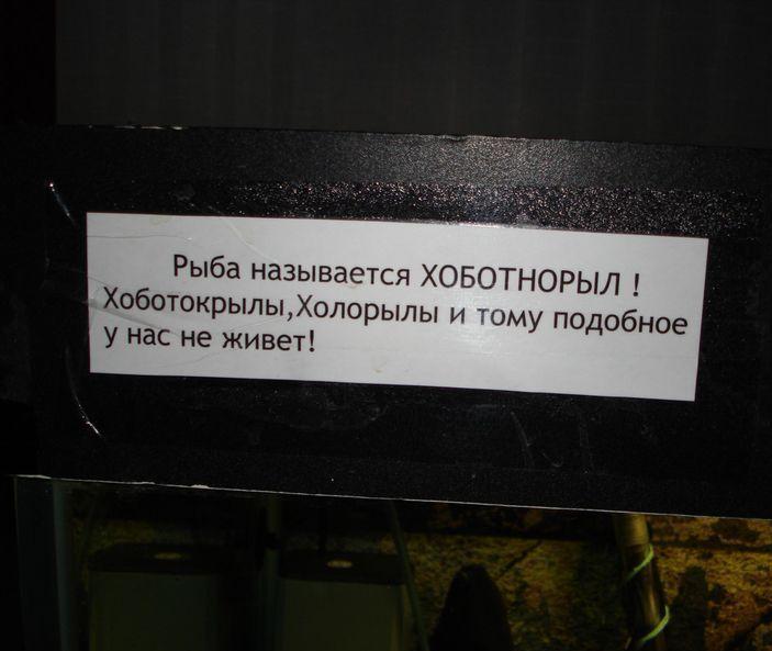 Хоботнорыл